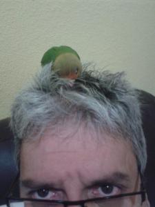 Dragon en cabeza